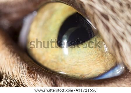 yellow cat eyes. super macro - stock photo