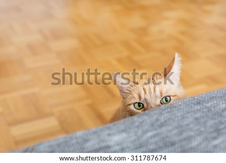 Yellow cat hidden behind a sofa in lounge - Beautiful cat with green eyes play next the the couch - main focus on the eyes - stock photo