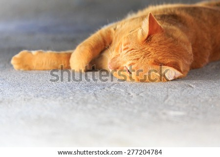 yellow cat lay down on cement floor - stock photo