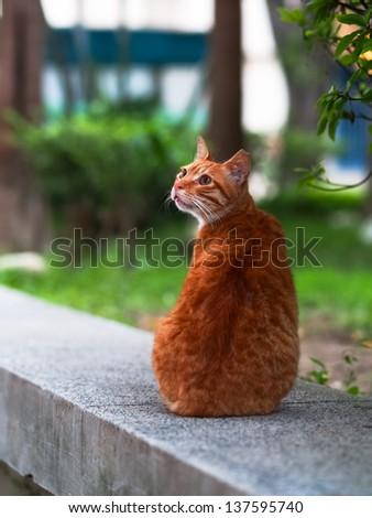 yellow cat look back - stock photo