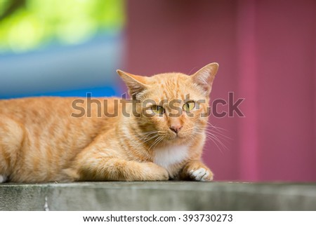 yellow cat  lying on a walls on the street