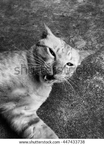 Yellow Cat smiling happily sleeping , cat , yellow , animal , concrete , black and white image