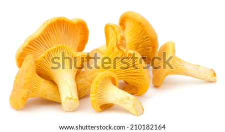 Yellow chanterelle isolated on white background - stock photo