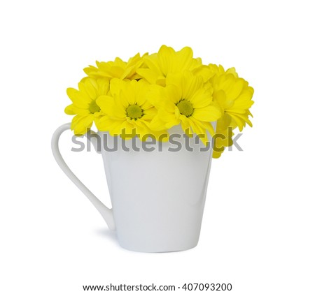 Yellow Chrysanthemum flower in a pot isolated on a white background - stock photo