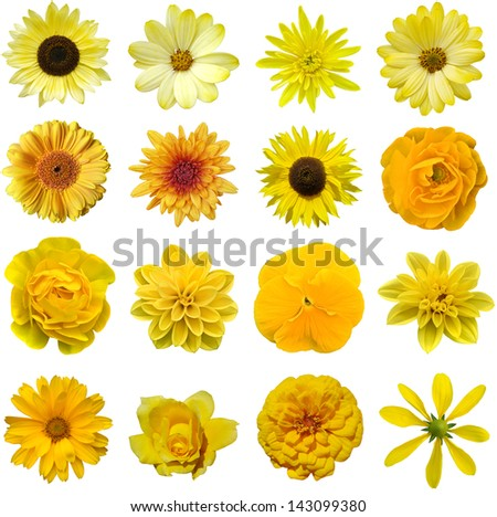 Yellow collage flower - stock photo