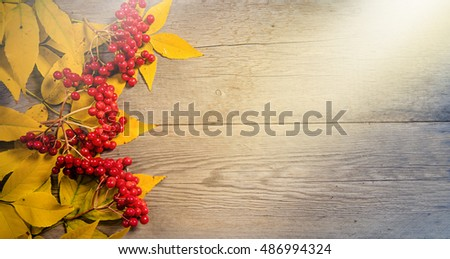 yellow colorful autumn leaves and red berries on wooden background copyspace