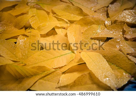 yellow colorful autumn leaves  background
