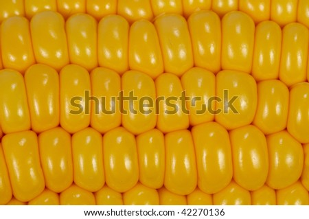 Yellow corn cobs. Close-up. Background