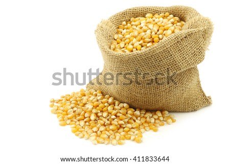 yellow corn grain in a burlap bag on a white background - stock photo
