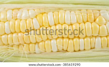 Yellow corn isolated on white background.