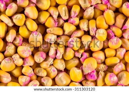 Yellow corn seeds - stock photo