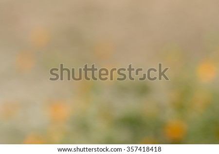 Yellow cosmos flower , Defocus and blur image - stock photo