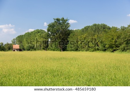 yellow countryside during summer time
