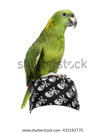 jack russell terrier 18 months old stock photo 44314318 shutterstock Dog Logo with Bandana Cartoon Dog with Bandana