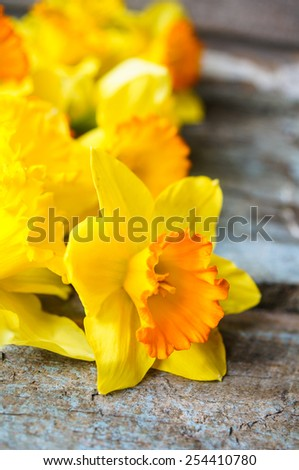 Yellow daffodill flower on the old wooden table - stock photo