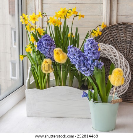 Yellow daffodils and hyacinths in blue balcony boxes for flowers on the balcony - stock photo