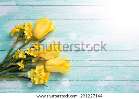 Yellow daffodils and tulips flowers in ray of light  on turquoise  painted wooden planks. Selective focus. Place for text.  - stock photo