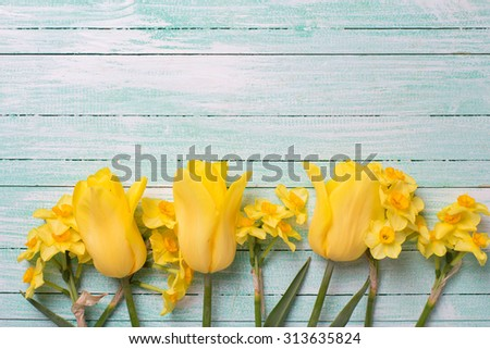 Yellow daffodils and tulips flowers  on turquoise  painted wooden background. Selective focus. Place for text.  - stock photo