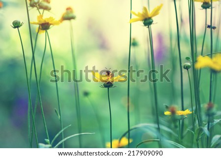 yellow daisies in a meadow - stock photo