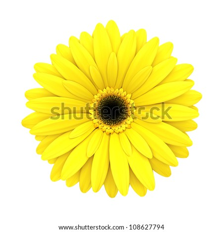 Yellow daisy flower isolated on white background - 3d render - stock photo