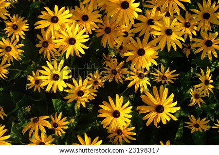 Yellow daisy flowers - stock photo