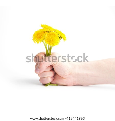 Yellow Dandelion in hand isolated on the white background