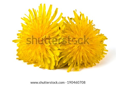 yellow dandelion isolated on a white background - stock photo