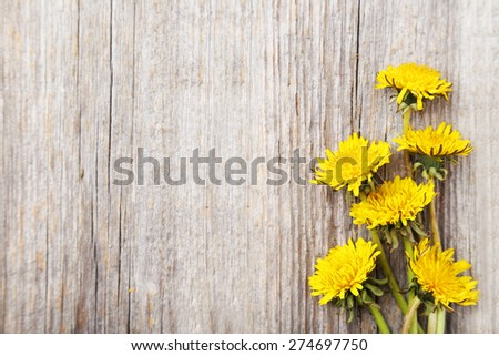 Yellow dandelion on grey wooden background - stock photo