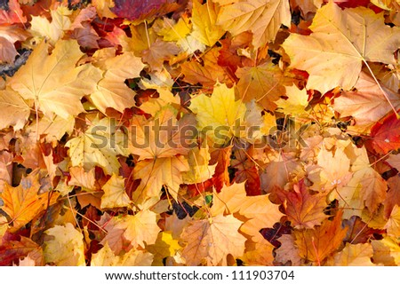 yellow decorative maple leafs fall background - stock photo