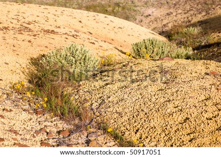 yellow desert soil