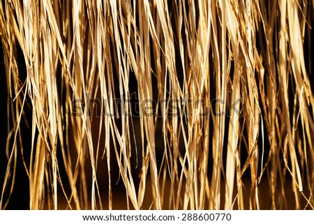 Yellow dry grass (reed) background. - stock photo