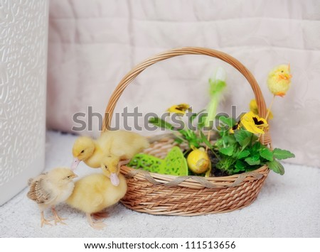 yellow ducklings in a wattled basket
