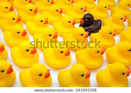 yellow ducks and black in the opposite direction - stock photo