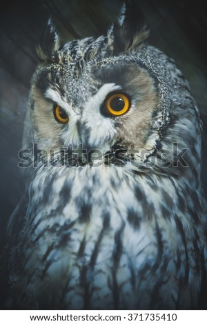 Yellow eyed eagle owl looking for pray at night in the moonlight - stock photo