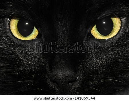 yellow eyes of black cat - stock photo