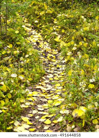 Yellow fall leaves fallen on path