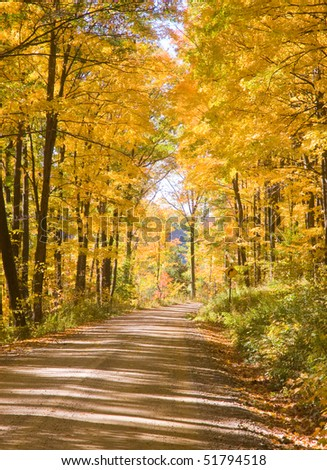 yellow fall leaves on a dirt lane