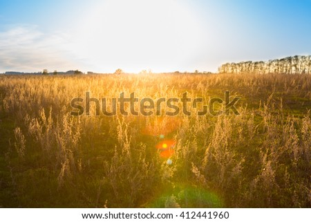 Yellow Field and Beautiful Sunset. Summer Landscape with Field.