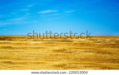 Yellow field and blue sky - stock photo