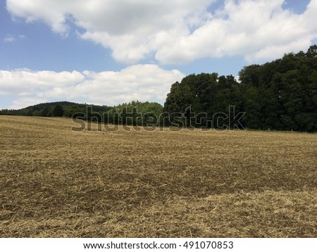 Yellow field under a cloudy blue sky