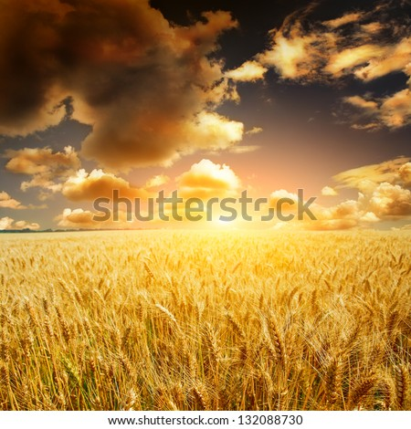 yellow field with the blue sky