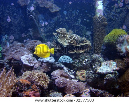 yellow fish aquarium