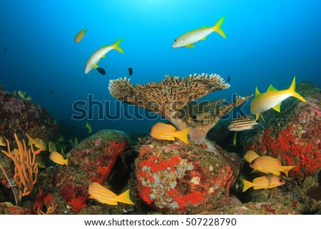 Yellow fish blue water coral reef