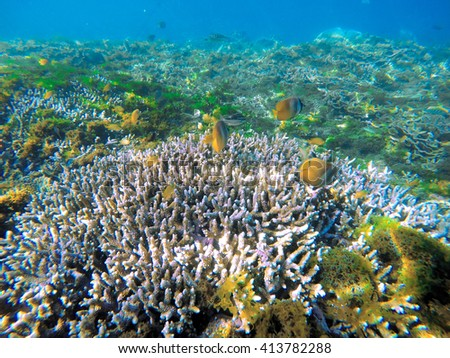 Yellow fishes and coral reef, white corals and coral fish babies, small butterfly fishes in white coral reef, coral reef ecosystem, fresh corals, sea  life and animals, beautiful sea landscape - stock photo