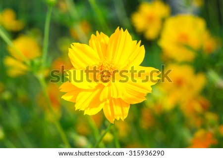 Yellow flower against sunlight in morning