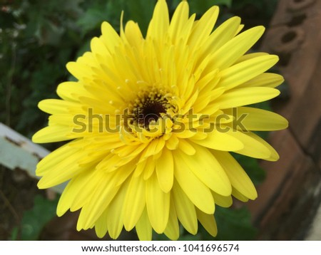 Yellow Flower bloom