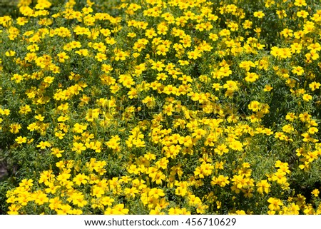 Yellow flower bush many yellow spring stock photo royalty free yellow flower bush many yellow spring flowers mightylinksfo Images