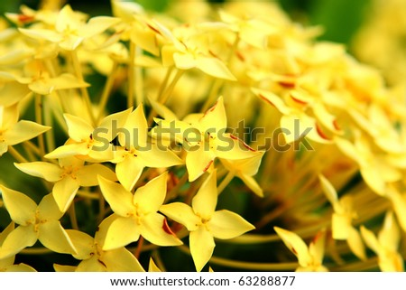 yellow flower close up at day - stock photo