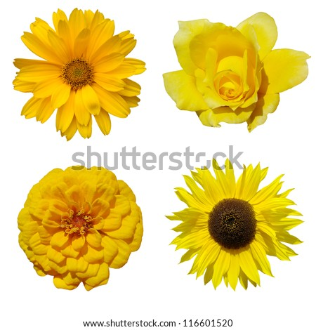 yellow flower collage - stock photo