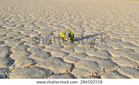 Yellow flower growing out of cracks in the earth - stock photo
